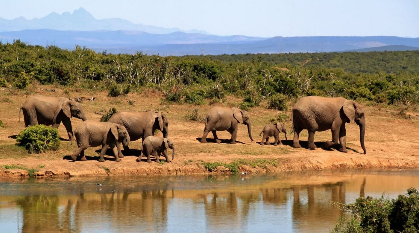 See wildlife on your Gap Year to learn languages in Kenya