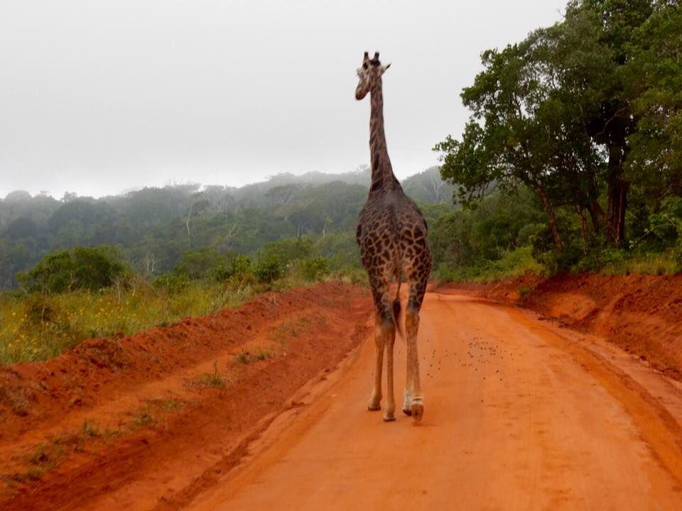 You might share the roads with wildlife when you travel in Africa