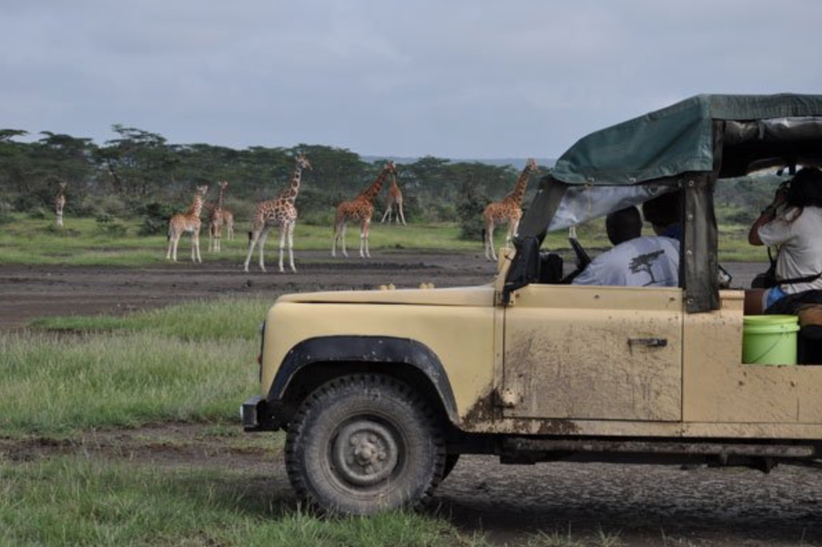 Go on safari on a gap year in Africa
