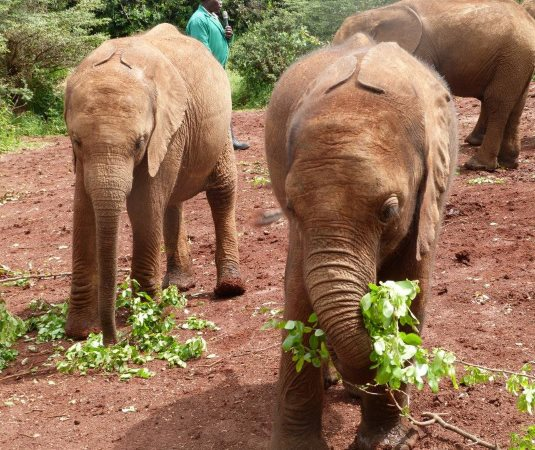 Volunteer this summer with elephants